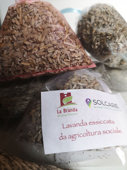 Dried lavender | Bio Products Online | Bio Store
